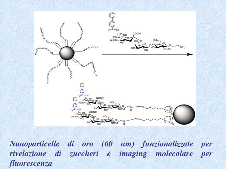 Nanoparticelle di oro (60 nm) funzionalizzate per rivelazione di zuccheri e imaging molecolare per fluorescenza