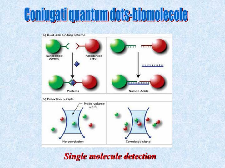 Coniugati quantum dots-biomolecole