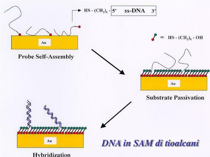 DNA in SAM di tioalcani