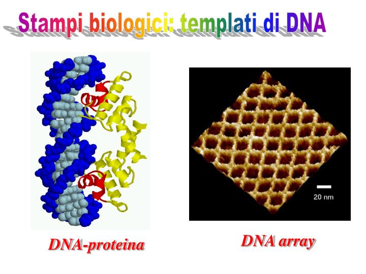 Stampi biologici: templati di DNA