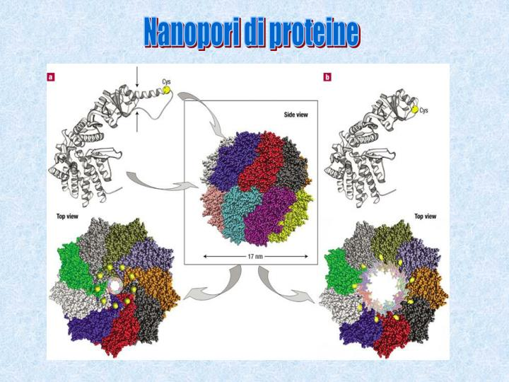 Nanopori di proteine