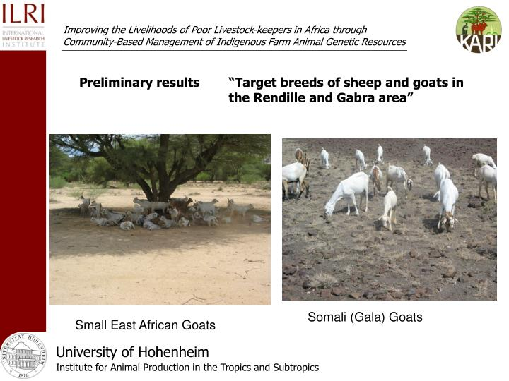 """Preliminary results""""Target breeds of sheep and goats in the Rendille and Gabra area"""""""