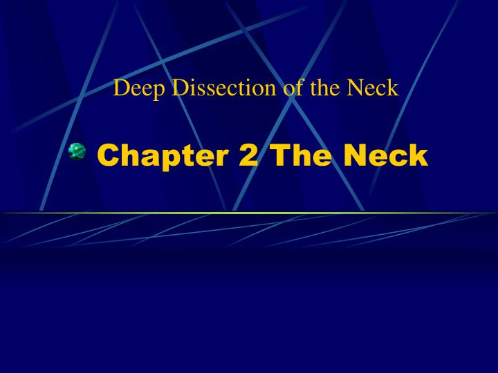 chapter 2 the neck n.