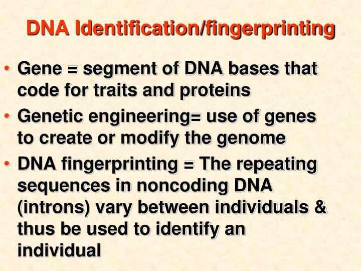 DNA Identification/fingerprinting