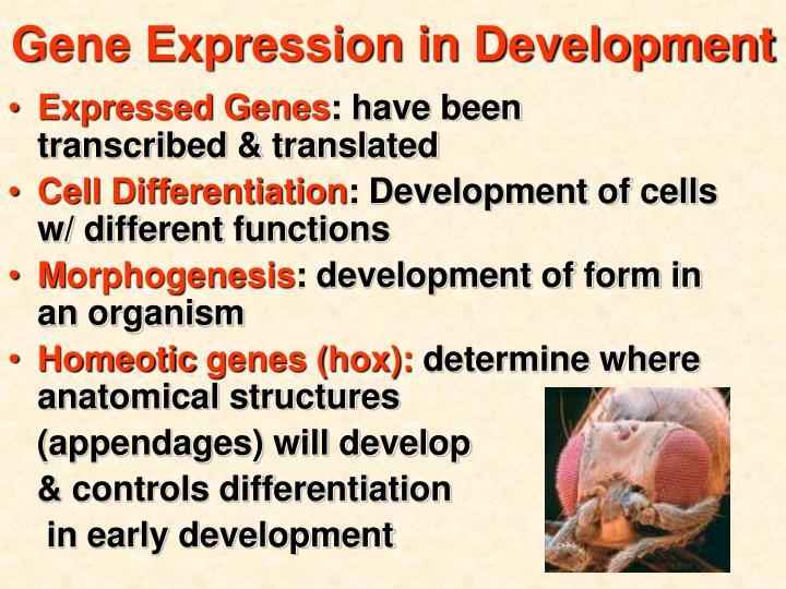 Gene Expression in Development