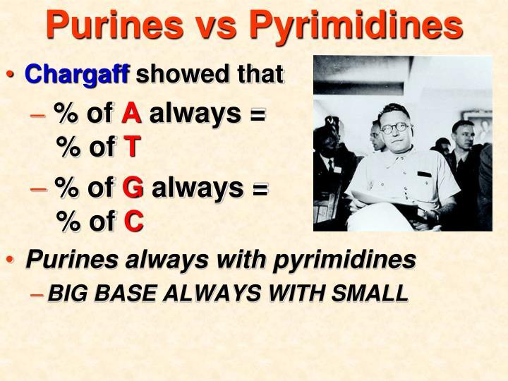 Purines vs Pyrimidines