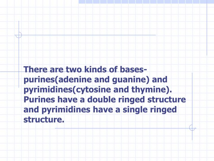 There are two kinds of bases-purines(adenine and guanine) and pyrimidines(cytosine and thymine). Purines have a double ringed structure and pyrimidines have a single ringed structure.