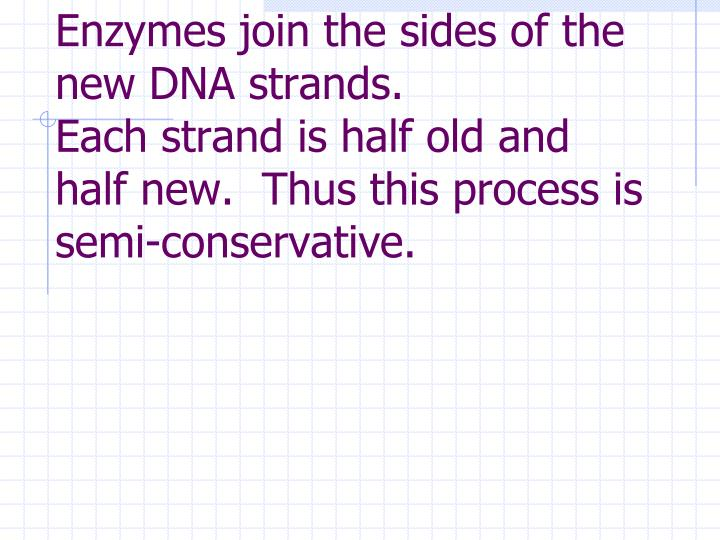 Enzymes join the sides of the new DNA strands.