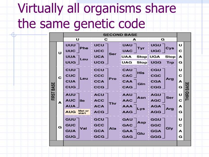 Virtually all organisms share the same genetic code