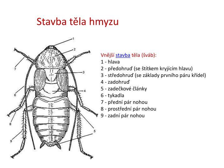 Stavba těla hmyzu