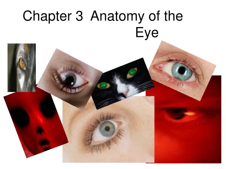 Ppt Chapter 3 Anatomy Of The Eye Powerpoint Presentation Id5202132