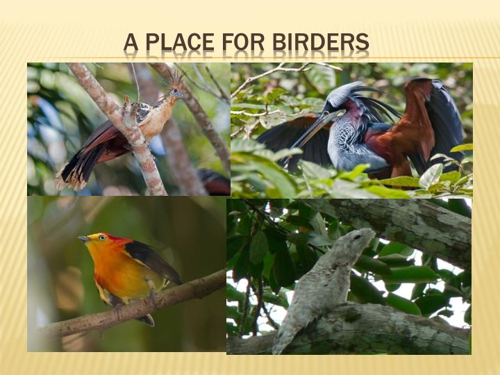 A PLACE FOR BIRDERS
