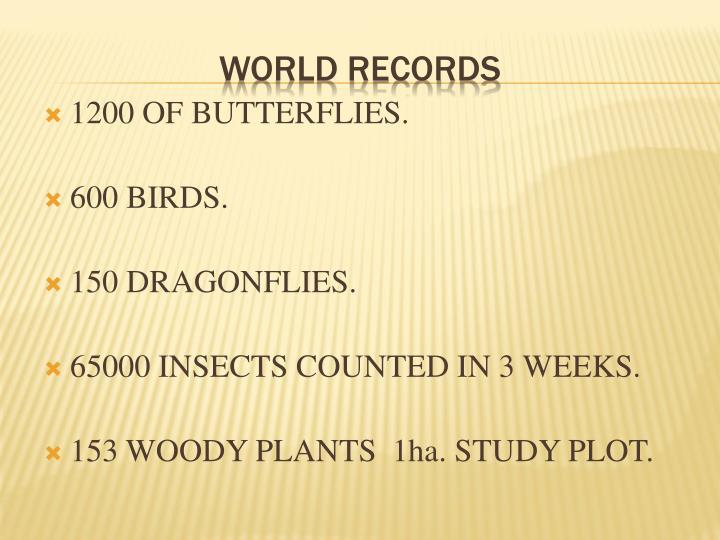 1200 OF BUTTERFLIES.