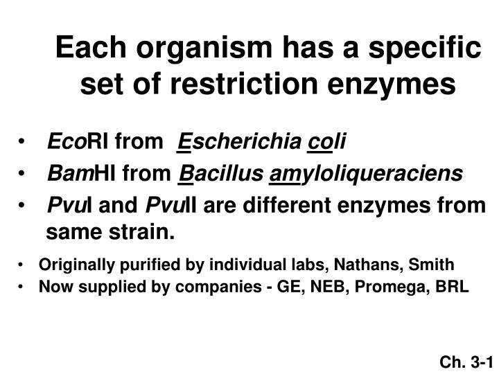 Each organism has a specific set of restriction enzymes