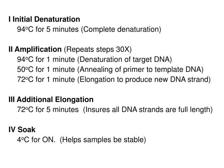 I Initial Denaturation