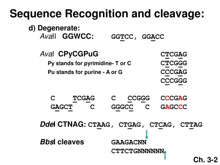 Sequence Recognition and cleavage: