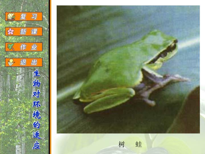 树   蛙