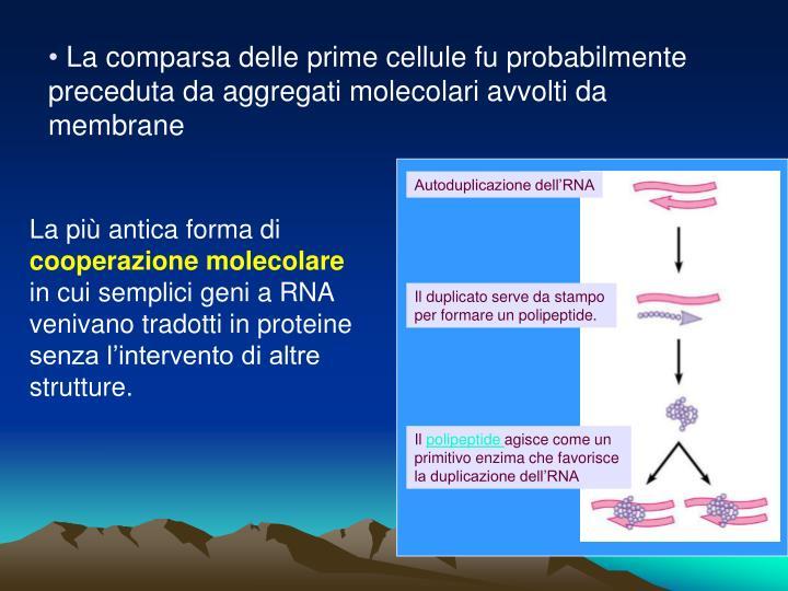 Autoduplicazione dell'RNA