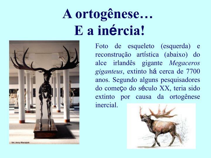 A ortog
