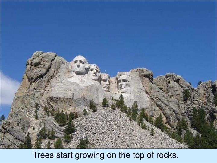 Trees start growing on the top of rocks.