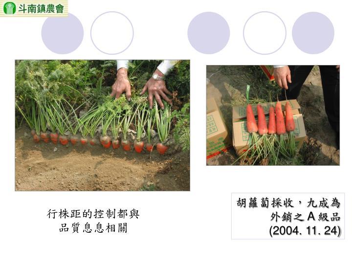 胡蘿蔔採收,九成為