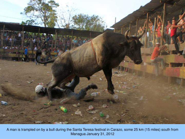 A man is trampled on by a bull during the Santa Teresa festival in Carazo, some 25 km (15 miles) south from Managua January 31, 2012