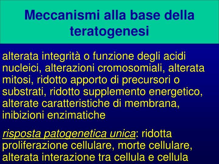 Meccanismi alla base della teratogenesi