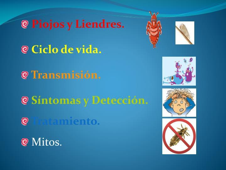 Piojos y liendres ciclo de vida transmisi n s ntomas y detecci n tratamiento mitos