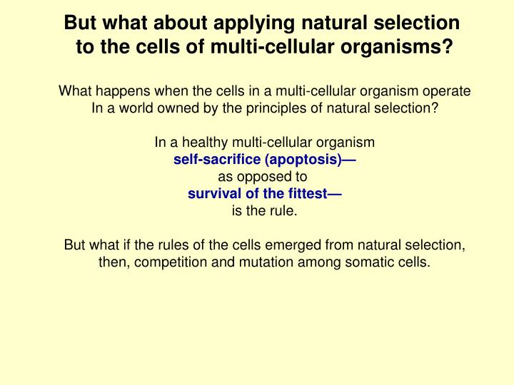 But what about applying natural selection