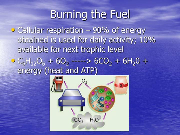 Burning the Fuel