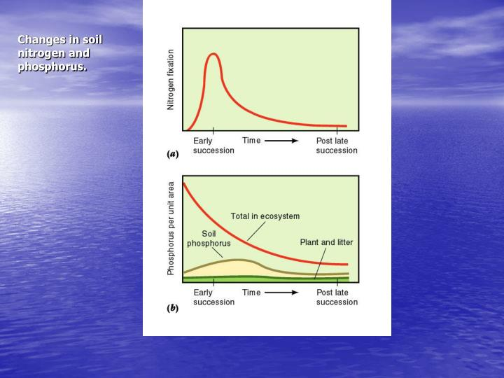 Changes in soil nitrogen and phosphorus.