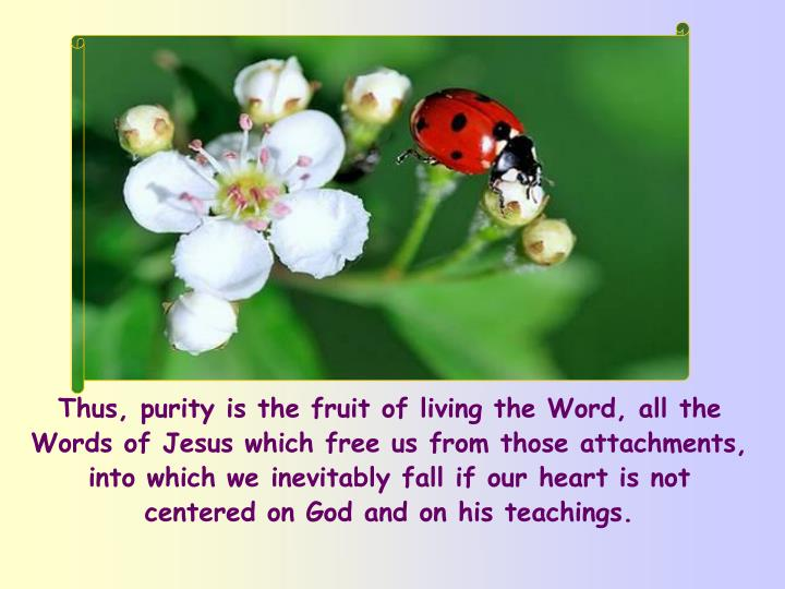 Thus, purity is the fruit of living the Word, all the Words of Jesus which free us from those attachments, into which we inevitably fall if our heart is not centered on God and on his teachings.