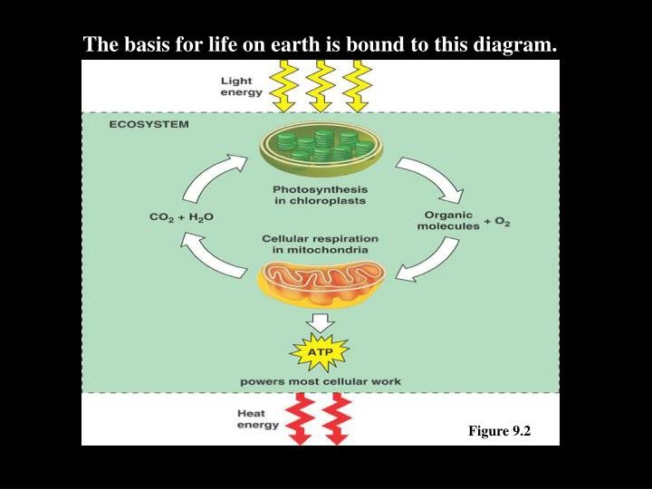 The basis for life on earth is bound to this diagram.
