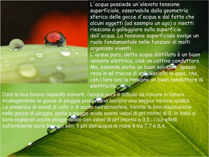 L'acqua possiede un'elevata tensione superficiale, osservabile dalla geometria sferica delle gocce d'acqua e dal fatto che alcuni oggetti (ad esempio un ago) o insetti riescono a galleggiare sulla superficie dell'acqua. La tensione superficiale svolge un ruolo fondamentale nelle funzioni di molti organismi viventi.