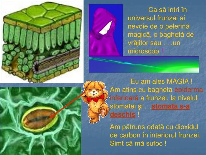 Ca să intri în universul frunzei ai nevoie de o pelerină magică, o baghetă de vrăjitor sau . . .un microscop
