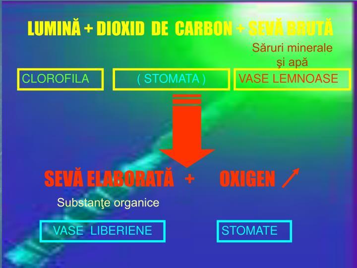 LUMINĂ + DIOXID  DE  CARBON + SEVĂ BRUTĂ