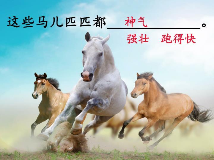 这些马儿匹匹都