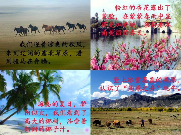 粉红的杏花露出了笑脸,在蒙蒙春雨中显得更加娇艳,装扮着江南美丽的春天。