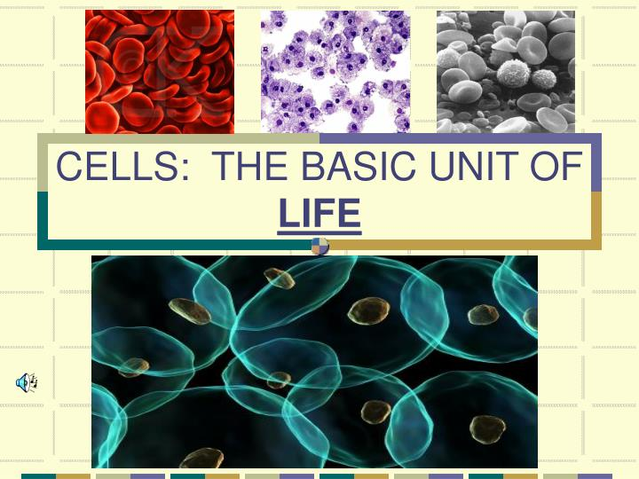 the basic unit of life Cell theory 3 classical interpretation 1 all living organisms are made up of one or more cells 2 cells are the basic unit of life 3 all cells arise from pre-existing cells(omni cellulae e cellula.