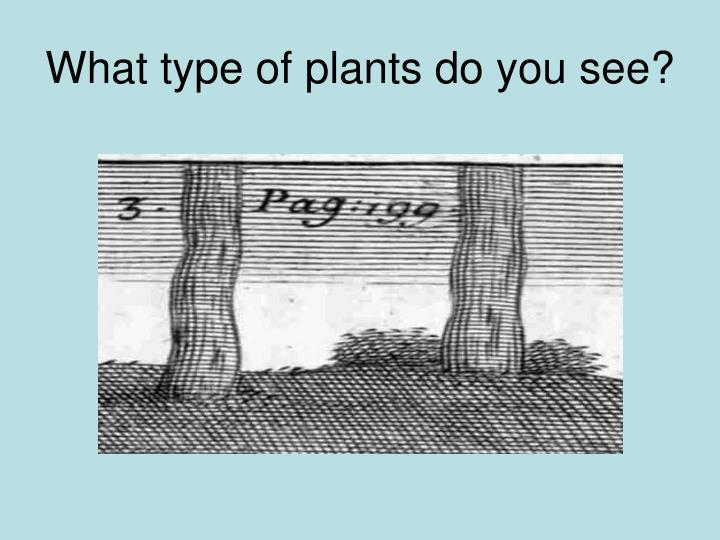 What type of plants do you see