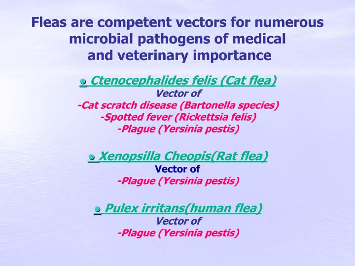 Fleas are competent vectors for numerous microbial pathogens of medical
