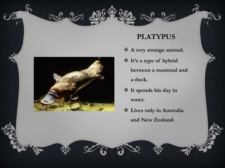 the strange animals of australia