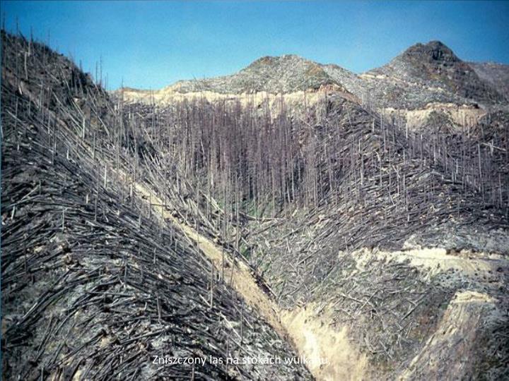 Zniszczony las na stokach wulkanu,