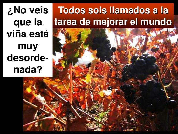 ¿No veis que la viña está muy desorde-nada?