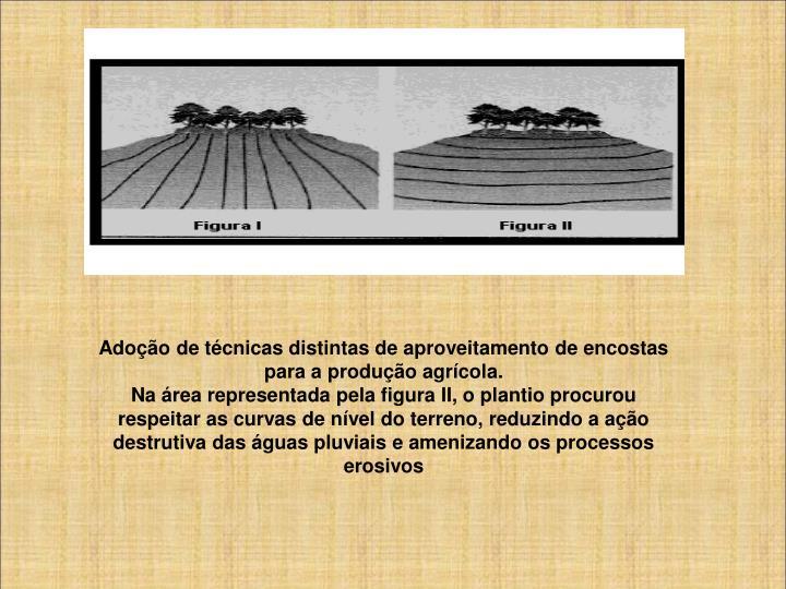 Adoção de técnicas distintas de aproveitamento de encostas para a produção agrícola.