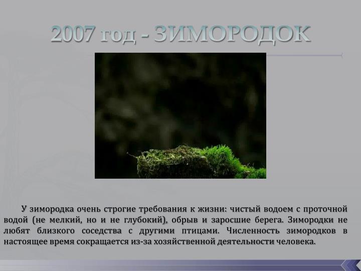 2007 год - ЗИМОРОДОК