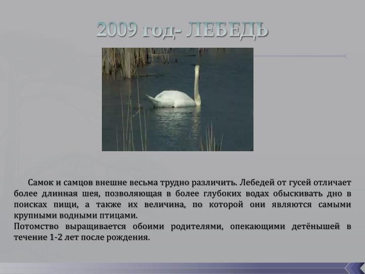 2009 год- ЛЕБЕДЬ