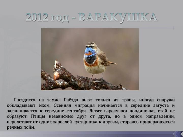 2012 год - ВАРАКУШКА