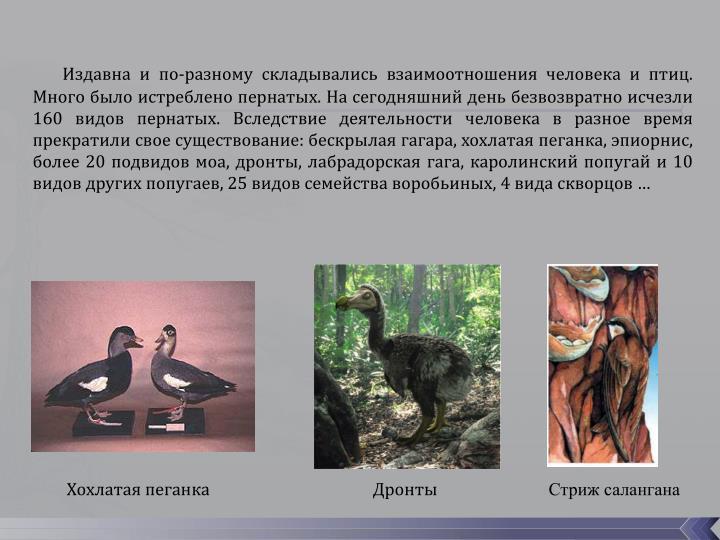 Издавна и по-разному складывались взаимоотношения человека и птиц. Много было истреблено пернатых. На сегодняшний день безвозвратно исчезли 160 видов пернатых. Вследствие деятельности человека в разное время прекратили свое существование: бескрылая гагара, хохлатая пеганка, эпиорнис, более 20 подвидов