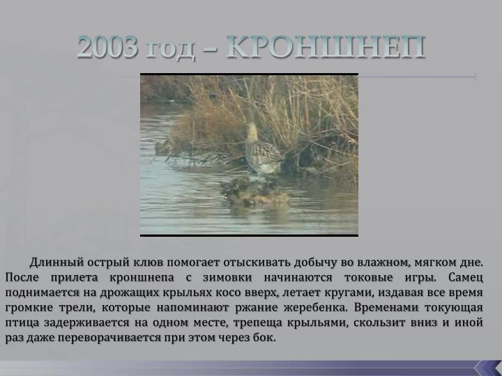 2003 год – КРОНШНЕП